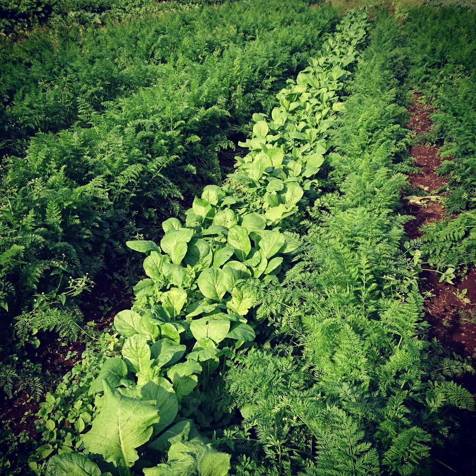 自然栽培・自然農法って何だろう?