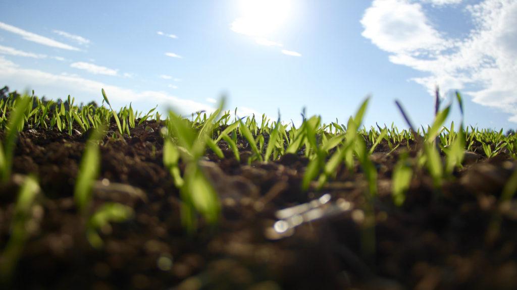 自然栽培で作物が育つ土へ。大切な3つのポイント。