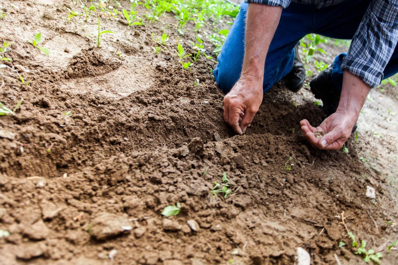 住みながら、庭で自然栽培・自然農法の野菜を育てて食べよう。賃貸戸建