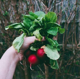 無料公開 映画『都市を耕す エディブル・シティ』/ 身近で野菜を育てよう